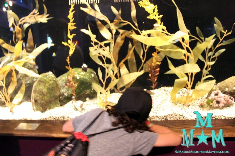 Oklahoma Aquarium Marvels and Mysteries